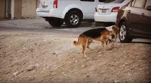 الميت قط والدافن كلب فيديو يعلم معنى الرحمة